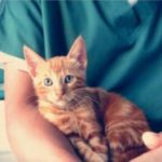 диагностика и лечеие гнойного процесса у кошек