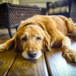 лечение и диагностика гастрита у собак