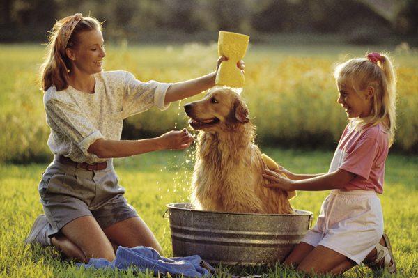 купаем собаку дома