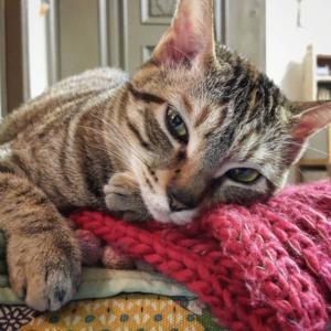 кошка после инфаркта
