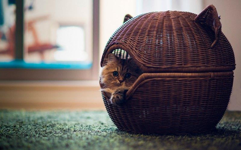 профилактика травм при эпилепсии у кошки