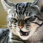 причины чиха и насморка у кота