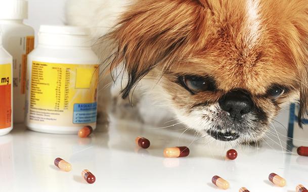 антибиотики для лечения сальмонеллеза