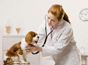 профилактика прогрессирования порока сердца у собаки