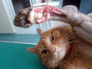 виды переломов у кошек
