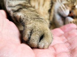 лечение перелома лап у кошек