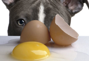 лечение сальмонеллеза у собак