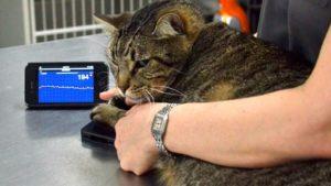 диагностика инфаркта миокарда у кошек