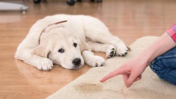 цистит у собак