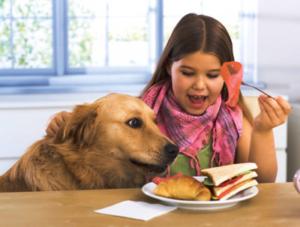 лечение ожирения у собак