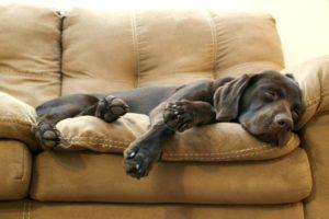 симптомы холецистита у собак