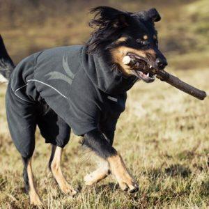 профилактика цистита у собаки