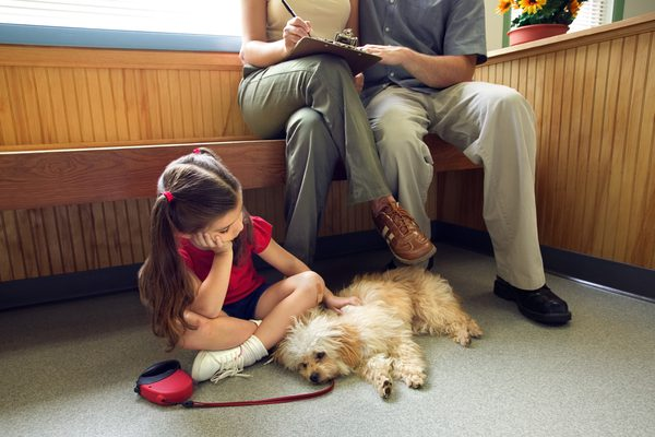 прогноз при сальмонеллезе у собаки
