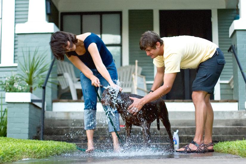 как правильно помыть собаку