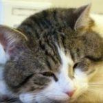 причины гнойного отделяемого из глаз у кошки