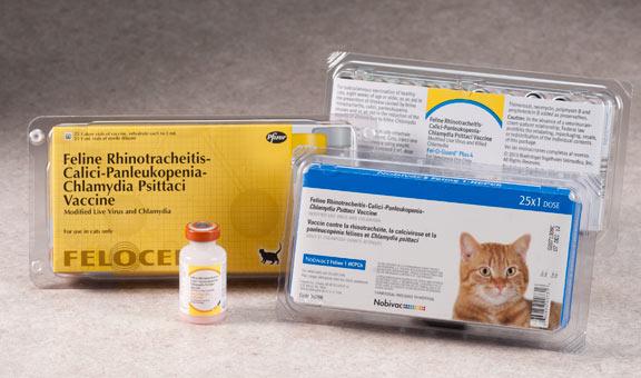 профилактика хламидиоза у кошек