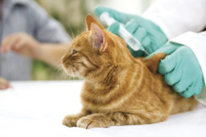 профилактика ВИЧ у кошек