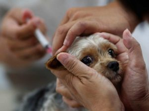 лечение сальмонеллеза у собаки