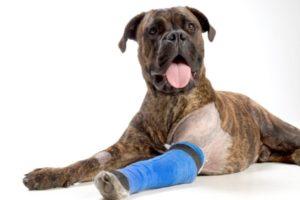 лечение артрита у собак