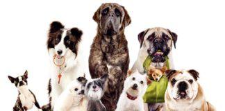 влияние породы собак на харакетр