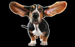 уход за ушами