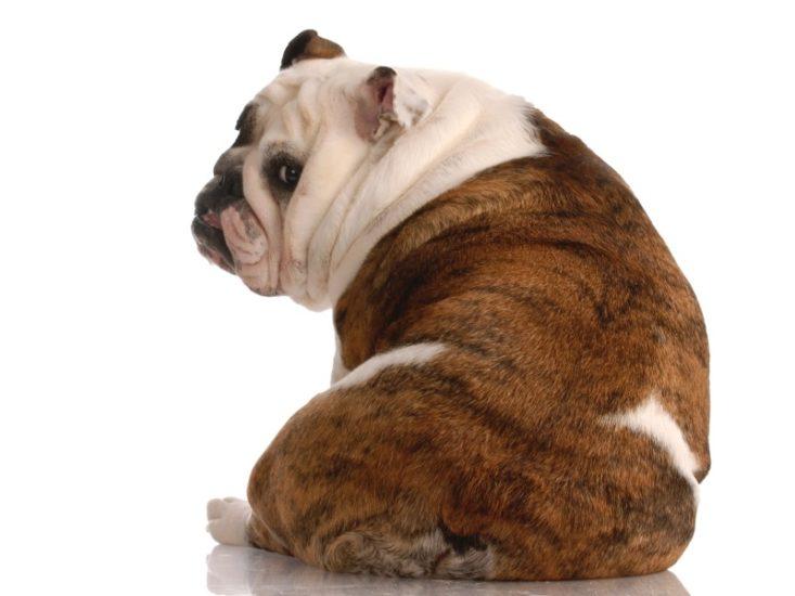 заболевания позвоночника у собак