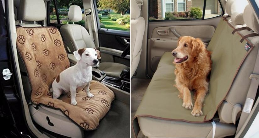 как путешествовать с собакой