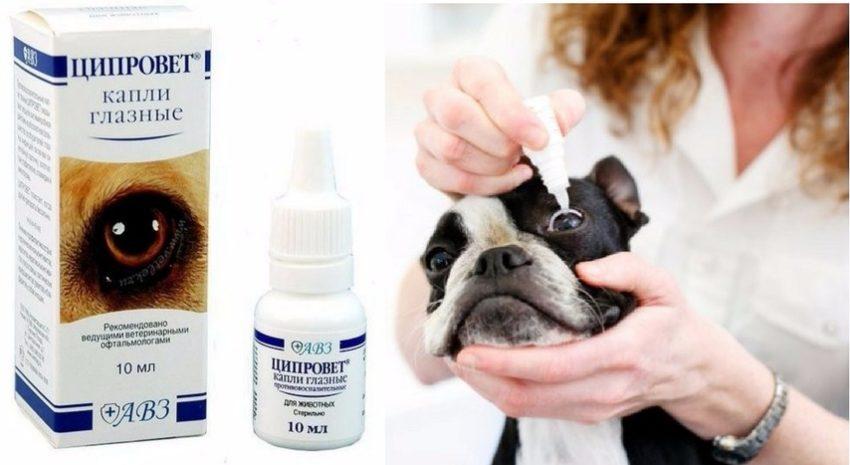 лечение простуды у собак