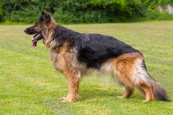симптомы протрузии у собак