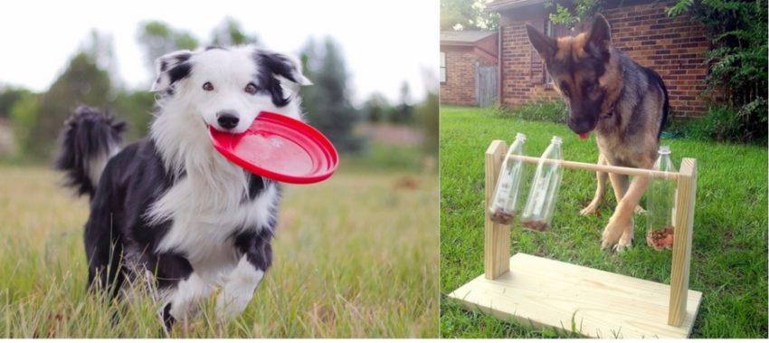 во что играть с собакой