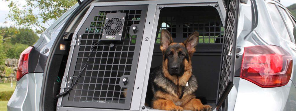 перевозка собаки в машине