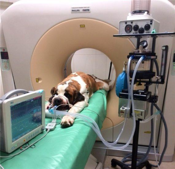диагностика патологии позвоночника у собак