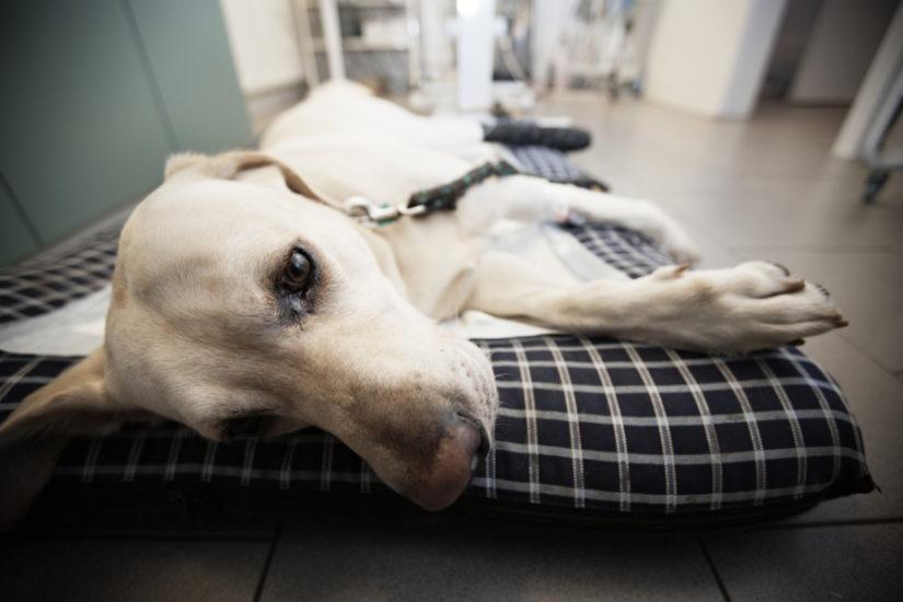 симптомы спондилеза у собак