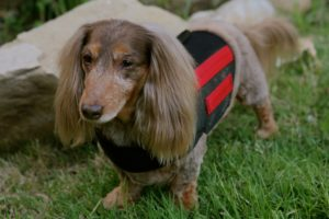 профилактика заболеваний позвоночника для собак