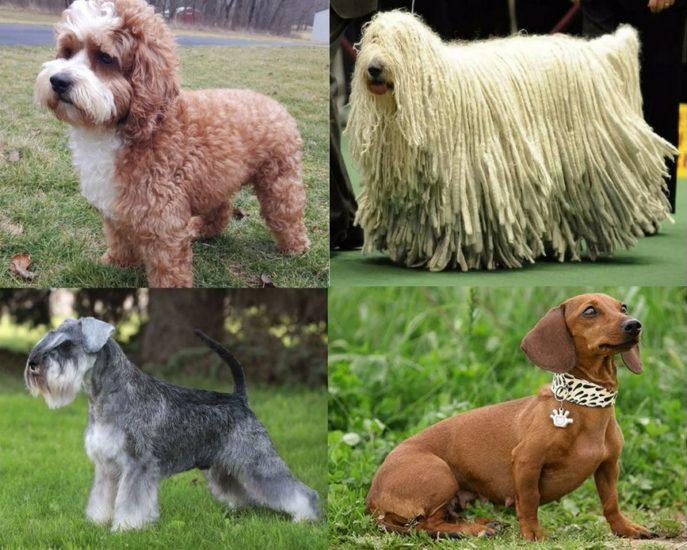 виды шерстяного покрова у собак