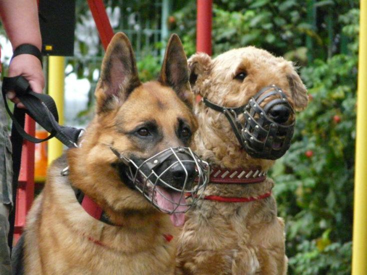 намордник на собаке