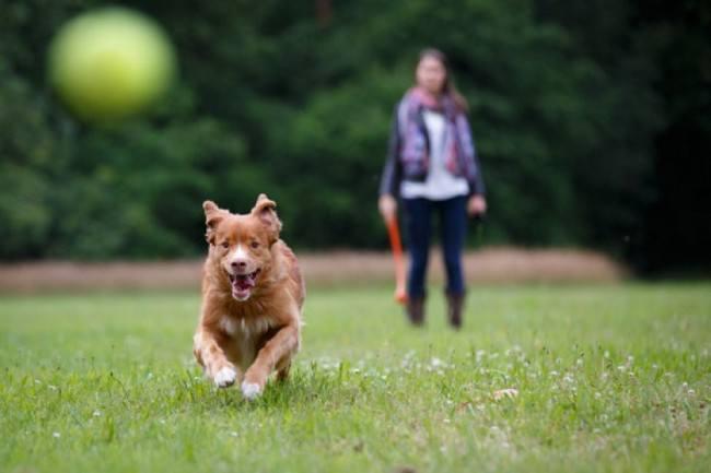 как приучить собаку к прогулкам