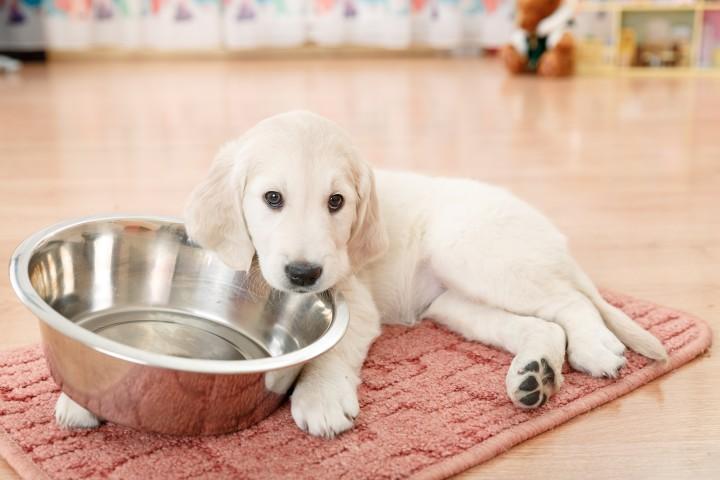 правила кормления собаки