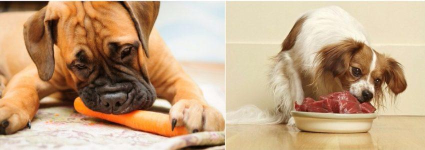 недостаток витамин у собак