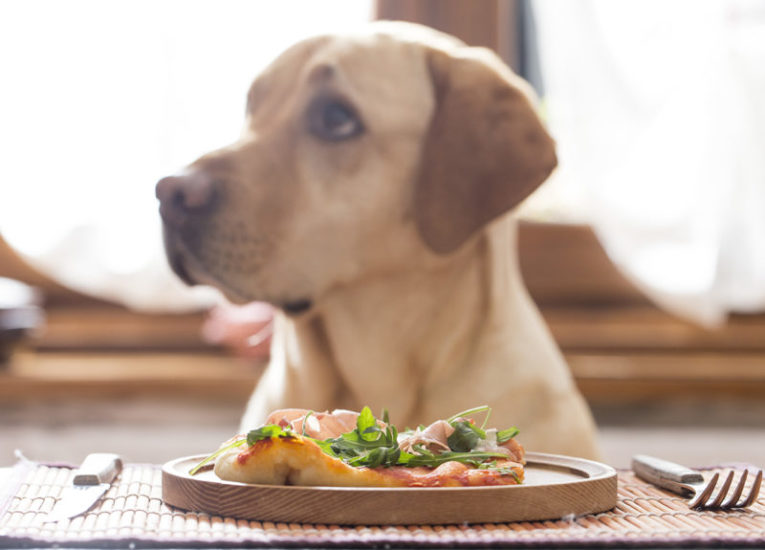 овощи в питании собаки