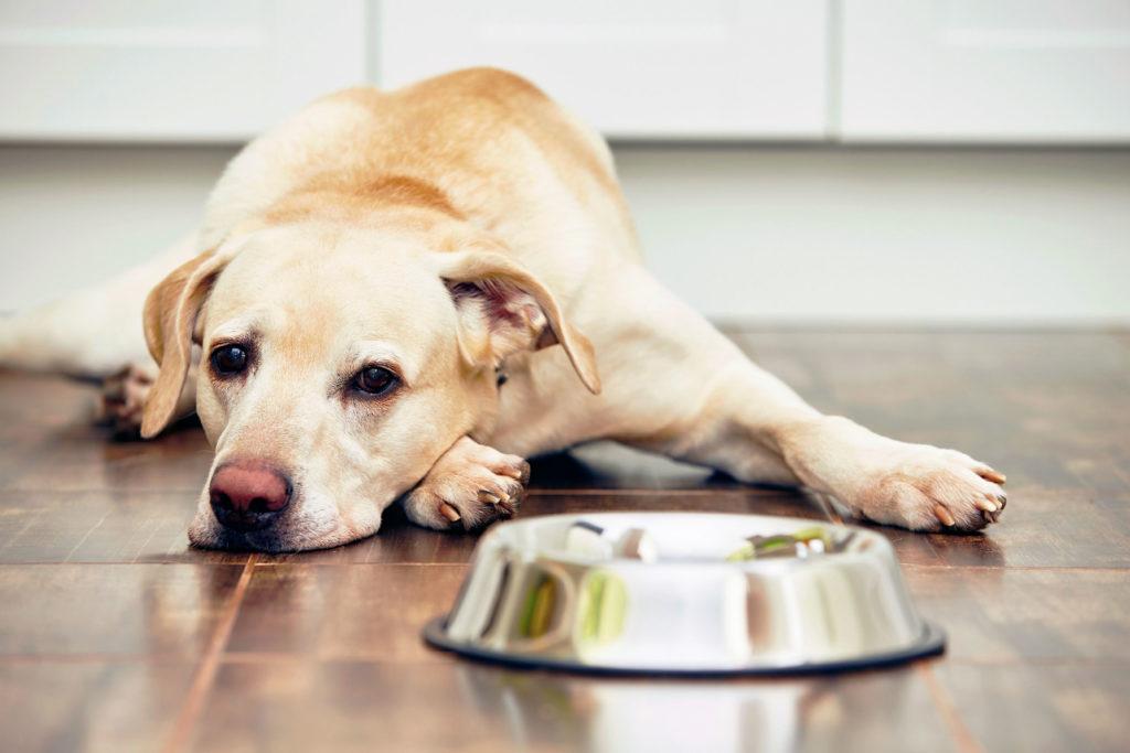 симптомы язвы желудка у собаки