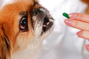 причины гастрита у собаки