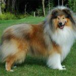 витамины для красивой и ухоженной шерстью собаки