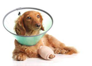 причины артрита у собак