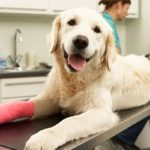 лечение ран у собак