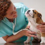 помощь собаке при инфаркте