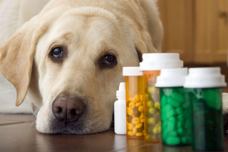 заболевания почек у собак