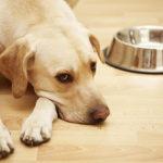 причины голодания собаки