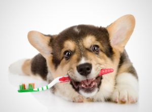 причинах плохого запаха у собаки изо рта