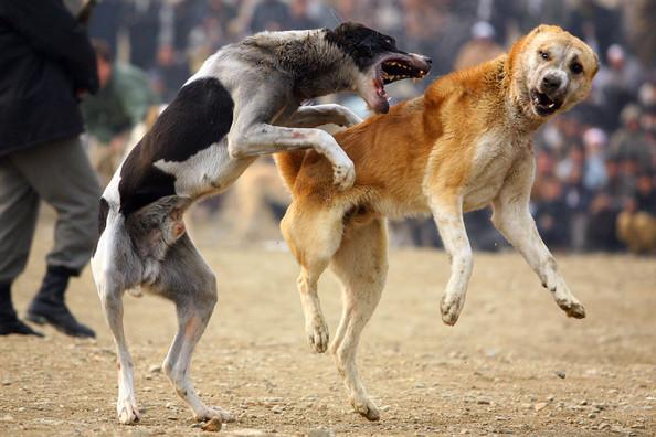 причины перелома позвоночника у собак